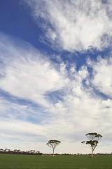 salmon gum sky (dalinean) Tags: trees sky tree clouds gum landscape sigma australia gumtree sd10 westaustralia eucaliptus hyden