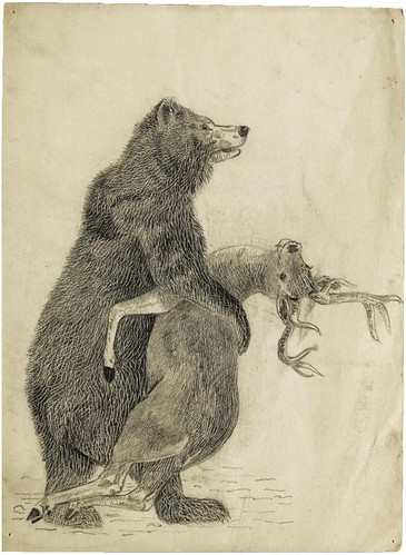 Bear clasping a deer (pencil and wax crayon)
