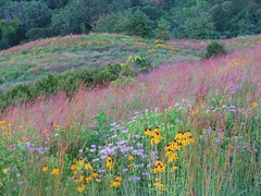 Field Painting (Cher12861) Tags: flowers summer color field landscape edited hill explore wildflowers preserve enhanced cherryontop moocard theunforgettablepictures goldstaraward blackwelllakeforestpreserve makemoocard