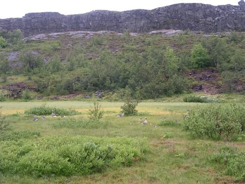 Þingvellir(3)