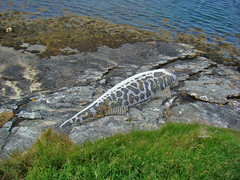 Mosaic Mackerel (helen.2006) Tags: blue sculpture shells fish glass scotland mosaic mussel quartz hebrides lochmaddy northuist blackbasalt themackerel rosalindwates