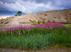 The Rros Series #30 (Krogen) Tags: summer norway landscape norge sommer july norwegen noruega juli rros krogen landskap noorwegen noreg trndelag olympuse3