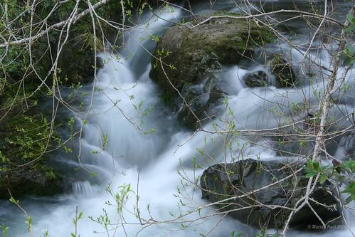 Teal River in Spring