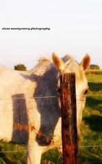 Can you still see me?... (Monty-e*) Tags: shadow horse interesting post belgium hide damniwishidtakenthat