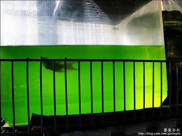 超濃縮綠水-6增量