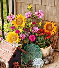 Fall assortment (❁bluejay 2006❁) Tags: flowers nature fleurs birdhouse sunflowers tuesday multicolor begonias specialeffects thankyouall bej nikond40 betterthangood goldstaraward allkindsofbeauty damniwishidtakenthat bluejay2006 tufaleaf