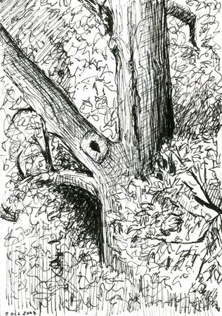 woodlandparktree