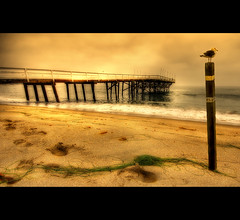 Guardian (Martyn Starkey) Tags: california sea beach pier post gull paradisecove justimagine flickrsbest platinumphoto colorphotoaward aplusphoto infinestyle platinumheartaward goldenheartaward vosplusbellesphotos