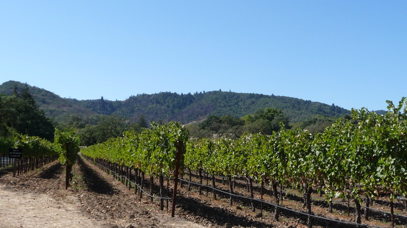 Chandon vineyard
