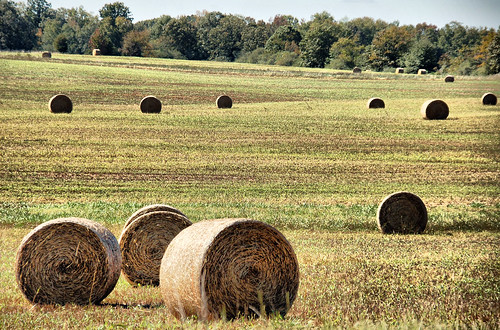 Bales of Hay 2 HDR
