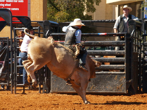 Dallas Texas Dodge Rodeo Live Bull Riding Exhibition At