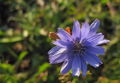 PurpleFlower_2068