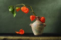 Physalis (AlexEdg) Tags: autumn stilllife texture october naturallight stilleben vase 2008 physalis wintercherry alexedg alledges infinestyle nikond300