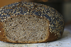 Cross Section: 100% Whole Wheat No Knead Bread