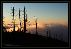 Watching the sunrise from above the clouds at Clingmans Dome in the Great Smoky Mountain National Park (Justashotinthedark.com) Tags: fall leaves clouds forest sunrise waterfall seasons tn fallfoliage gatlinburg pigeonforge tennesse townsend clingmansdome sevierville cadescove greatsmokymountainsnationalpark platinumphoto