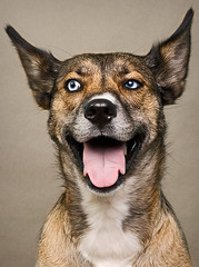 Roxie (4) (Piotr Organa) Tags: portrait dog pet toronto canada cute smile face smiling animal puppy husky shepherd german blueribbonwinner impressedbeauty aplusphoto flickrlovers