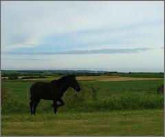 Camino de Entre Rios (Oitana) Tags: viaje horse caballo maria valle villa entre rios