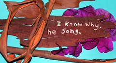 """""""I know why,"""" he sang."""