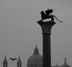 on the wings of the lion (gicol) Tags: plaza venice seagulls byn birds square blackwhite wings gulls lion belltower ali campanile uccelli cupola dome piazza venezia leone gabbiani biancoenero sanmarco favemegroup3