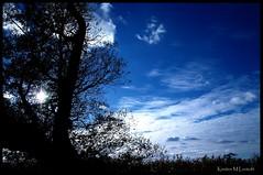 Blues on a tuesday (Kirsten M Lentoft) Tags: sky sun tree silhouette clouds denmark arresø kirstenmlentoft