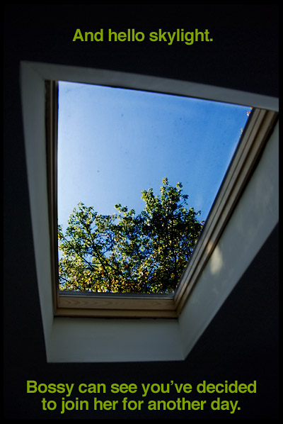 georgia-getz-skylight