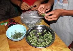 Cooking cicadas