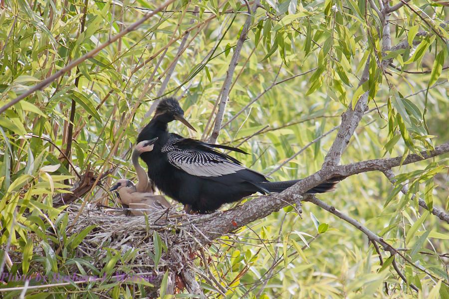 Everglades National Park (26 of 40)