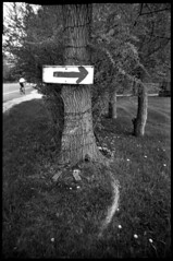 Here (Voxphoto) Tags: blackandwhite bw tree sign advertising trix annarbor cryptic plasticcamera jazz207 aristapremium400 cobracrystal