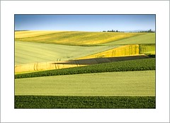 Vom Frhling zum Sommer  (from spring to summer) (alfred.hausberger) Tags: green bayern bavaria sommer felder fields grn abstrakt frhling getreide sonnenwende rottal updatecollection