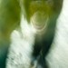 Los Angeles Zoo 063