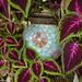 Little surprises in the garden2