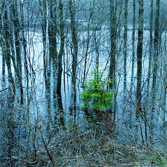 My Wild River In A Water Trap!!! :))) (Denis Collette...!!!) Tags: trees wild canada water river bravo eau quebec rivire arbres collette trap denis sauvage themoulinrouge portneuf firstquality eow pige pontrouge infinestyle deniscollette wildriver world100f watertrap