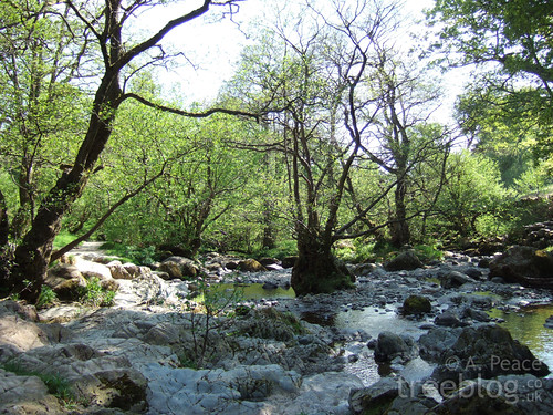 stony woodland river