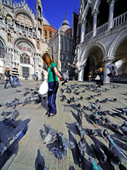 Bread of Life (Sator Arepo) Tags: leica venice birds square reflex pigeons zuiko doves digilux stmark 714mm digilux3 zd714mm