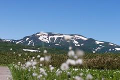 ワタスゲと暑寒別岳
