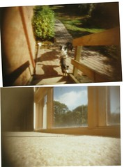 homemade pinhole camera photos (hey b-enjamin!) Tags: camera trees fish nature truck jack bmx collie pin russell hole border tub mindy results ripper ringwood
