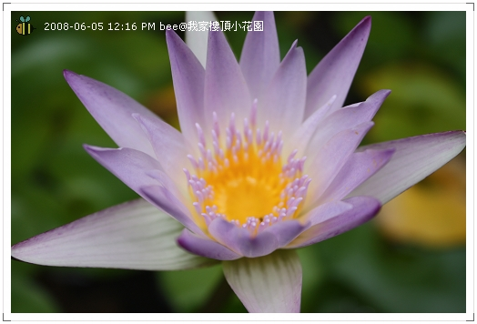 20080605@我家樓頂的小花園 (1)