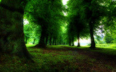 The Green Way (Martyn Starkey) Tags: trees green avenue naturesfinest clumberpark golddragon mywinners abigfave platinumphoto anawesomeshot colorphotoaward impressedbeauty infinestyle damniwishidtakenthat photoexel towerofpriapus poseidensdance