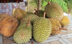 To Klnyc ....Durians