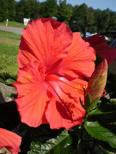 Janie's plant