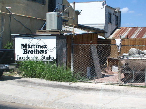 Martinez Brothers Taxidermy Studio in Austin.