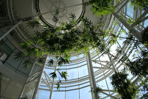 Bamboo Overhead: University of Michigan Cardiovascular Center