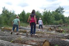 Logs and children (tworedboots) Tags: anna abbie josiah rambouillet