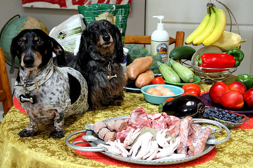 Raw Food Dachshunds 1