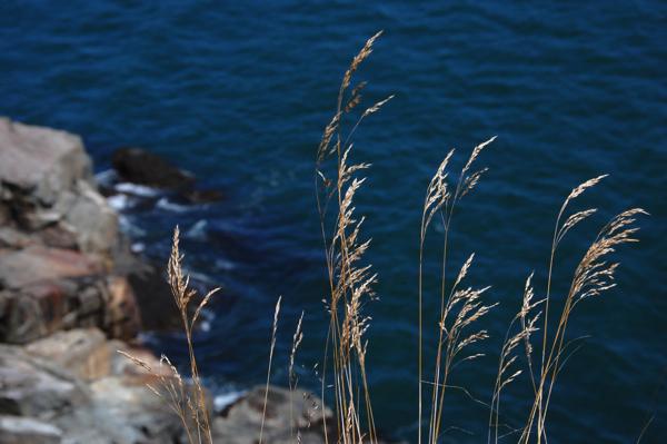 grass_ocean_0298