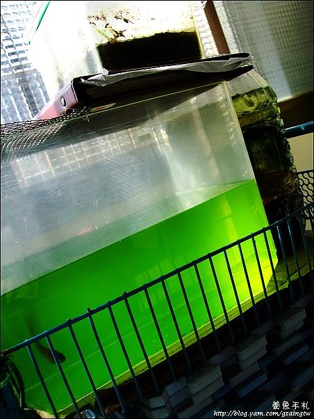 超濃縮綠水-5增量
