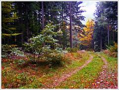 Forest road in autumn (Vestaligo) Tags: autumn mountain landscape austria sterreich herbst berge footpath landschaft niedersterreich bergwandern loweraustria kranichberg mountainwalking anawesomeshot citrit kunstplatzlinternational rahmsattel