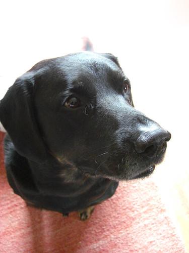 66 - A dog