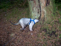 Sniffing a tree