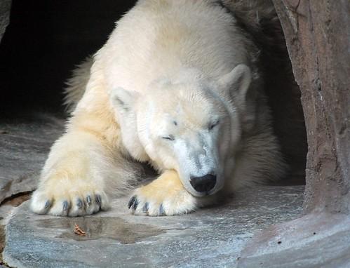 zoo 398